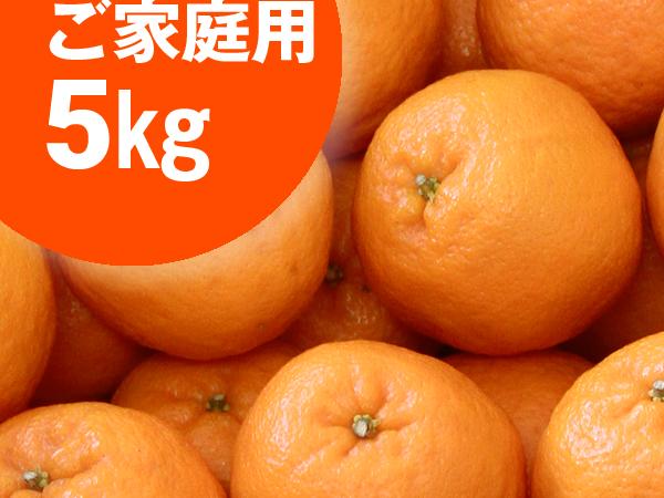 """ぽんかん ご家庭用 5kg <p class=""""out-of-stock"""">在庫切れ</p>"""